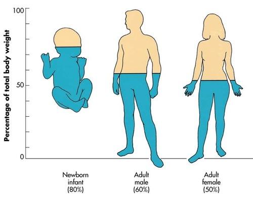 Emberi test víztartalma
