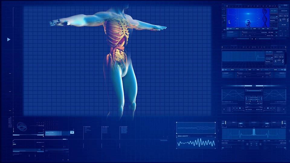 Emberi test anatómiája